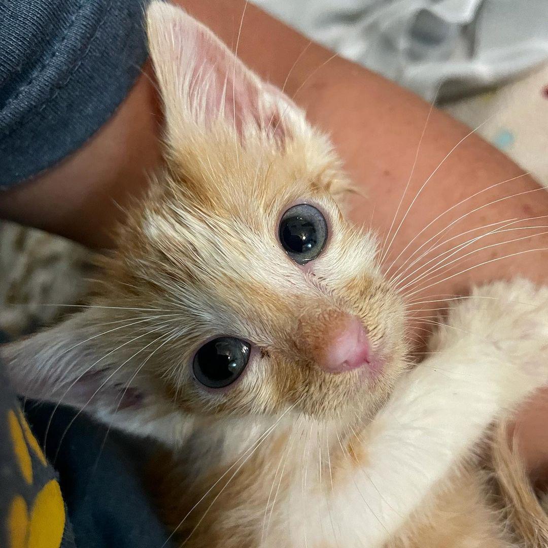 Gatito y su humano