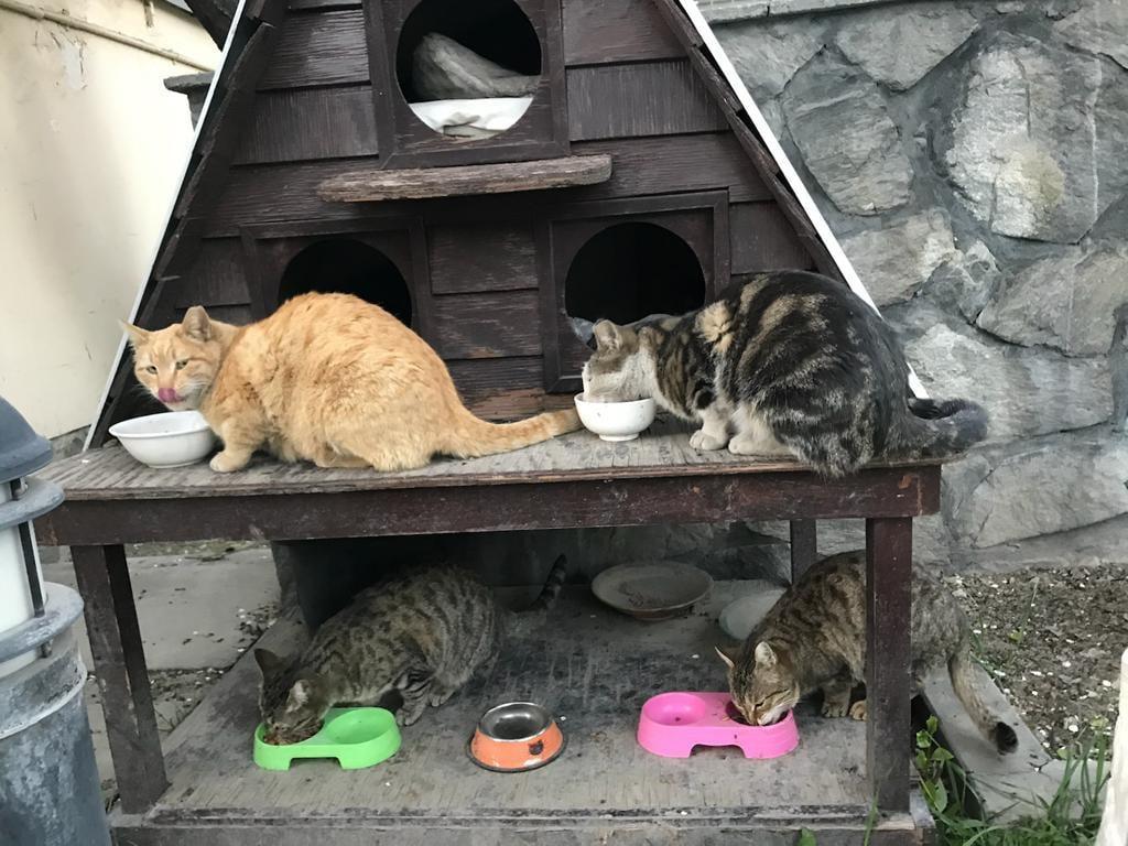 Gatitos alimentándose