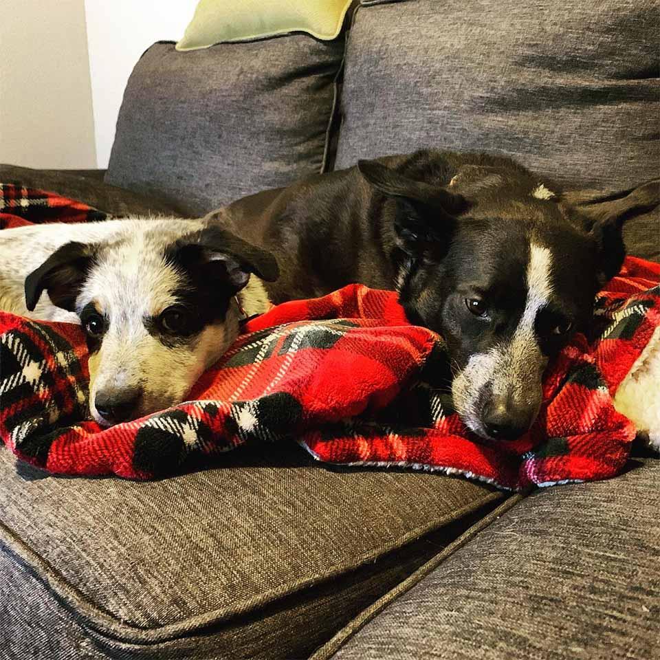 Hermanos cachorros