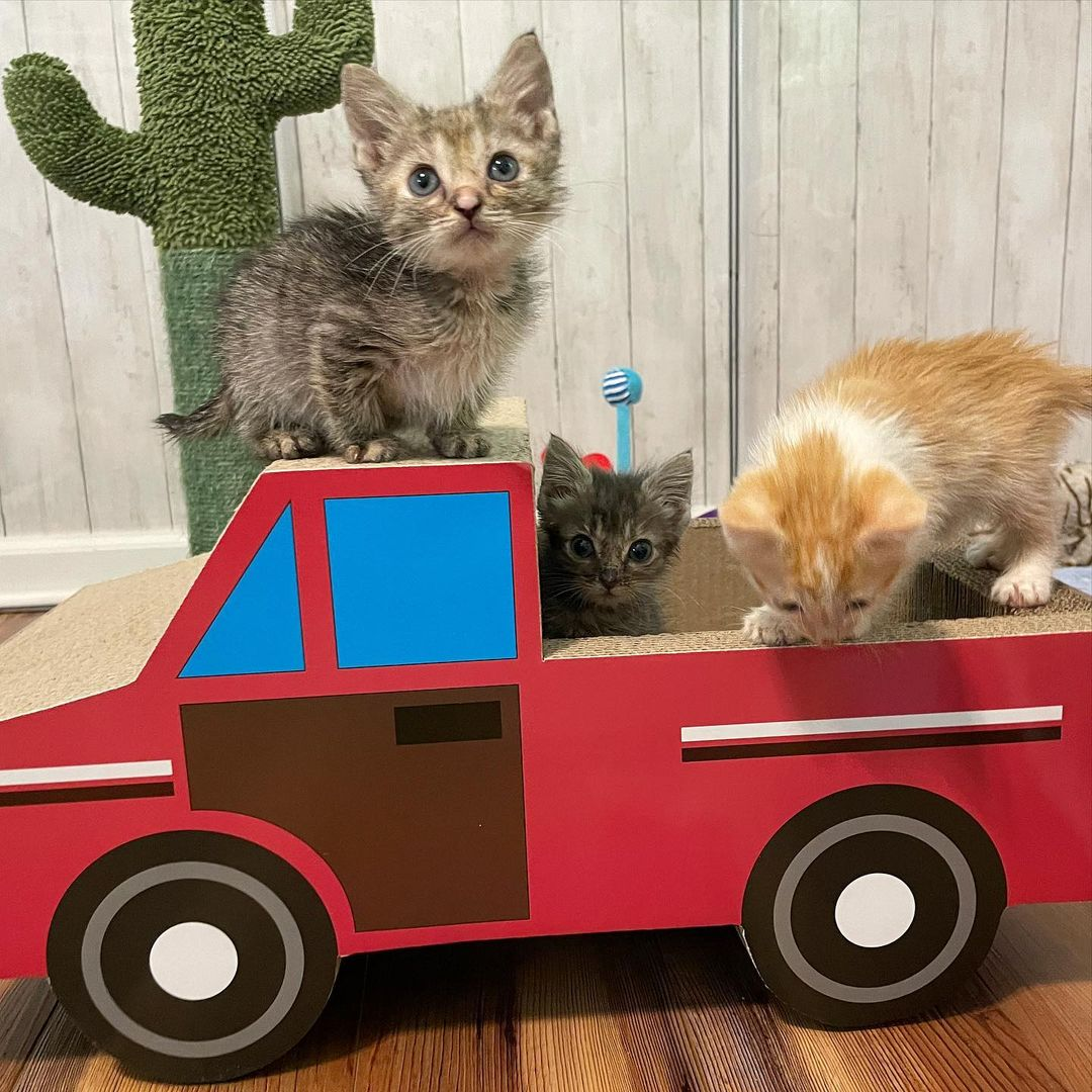 Hermosos gatitos bebés