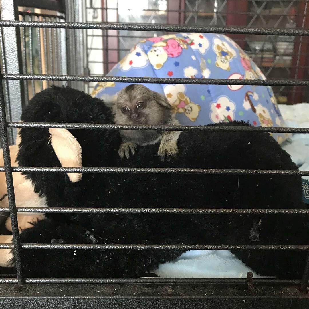Mono bebé rescatado