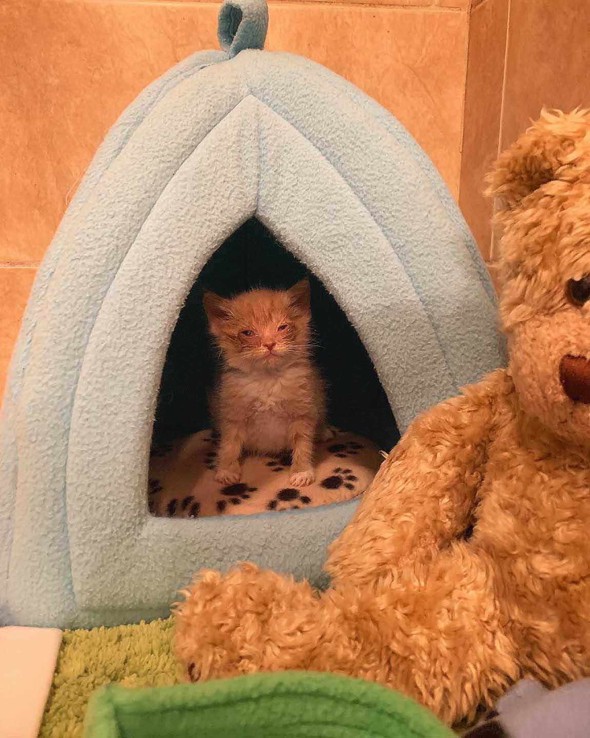 Pequeño gatito rescatado