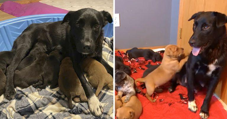 Perrita rescatada adopta cachorros huérfanos después de perder su propia camada