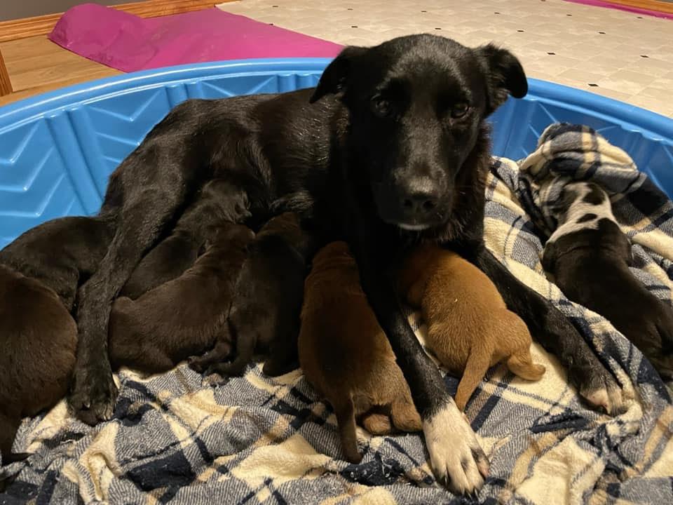 Perrita rescatada adopta cachorros