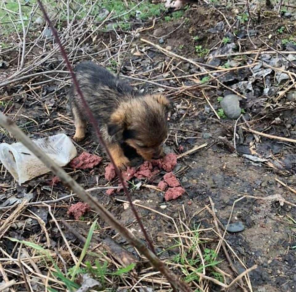 Perrito comiendo