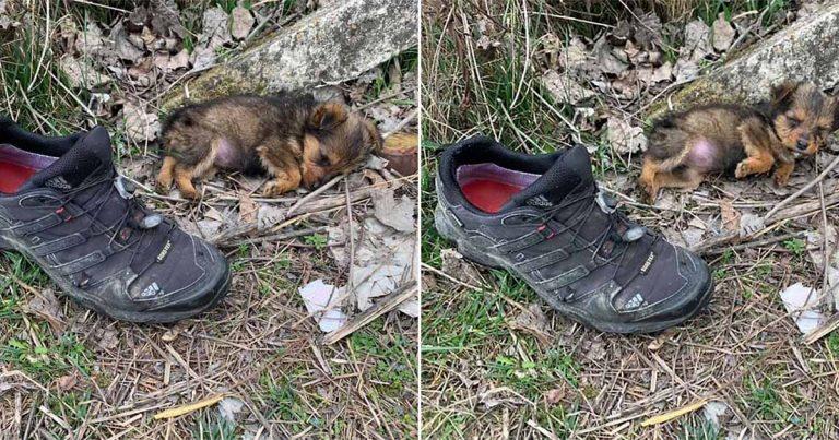 Perrito usaba un zapato como refugio hasta que un hombre lo salvó y le dio un hogar