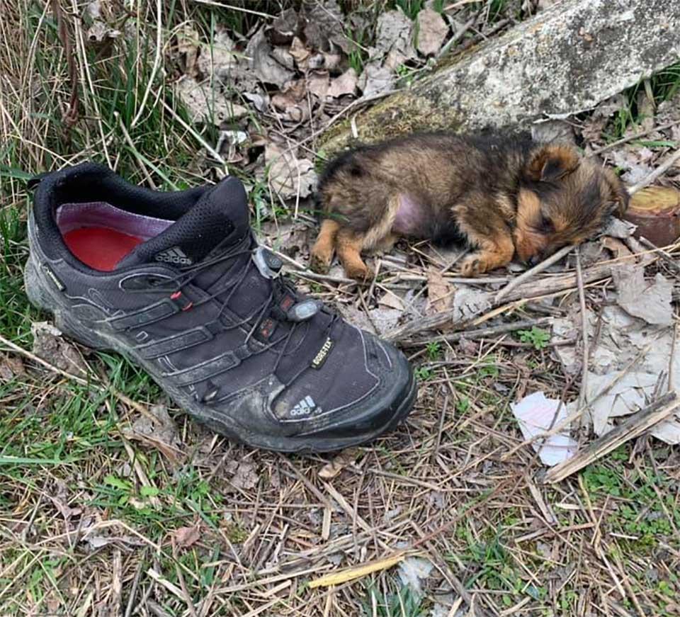 Perrito usaba zapato