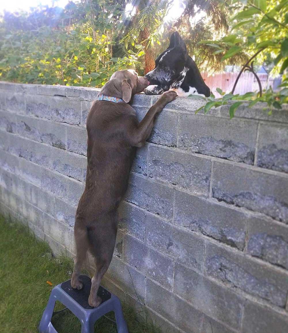 Perro amistoso obtiene un taburete para poder ver a sus vecinos
