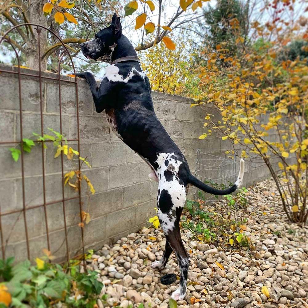 Perro se para junto a la cerca