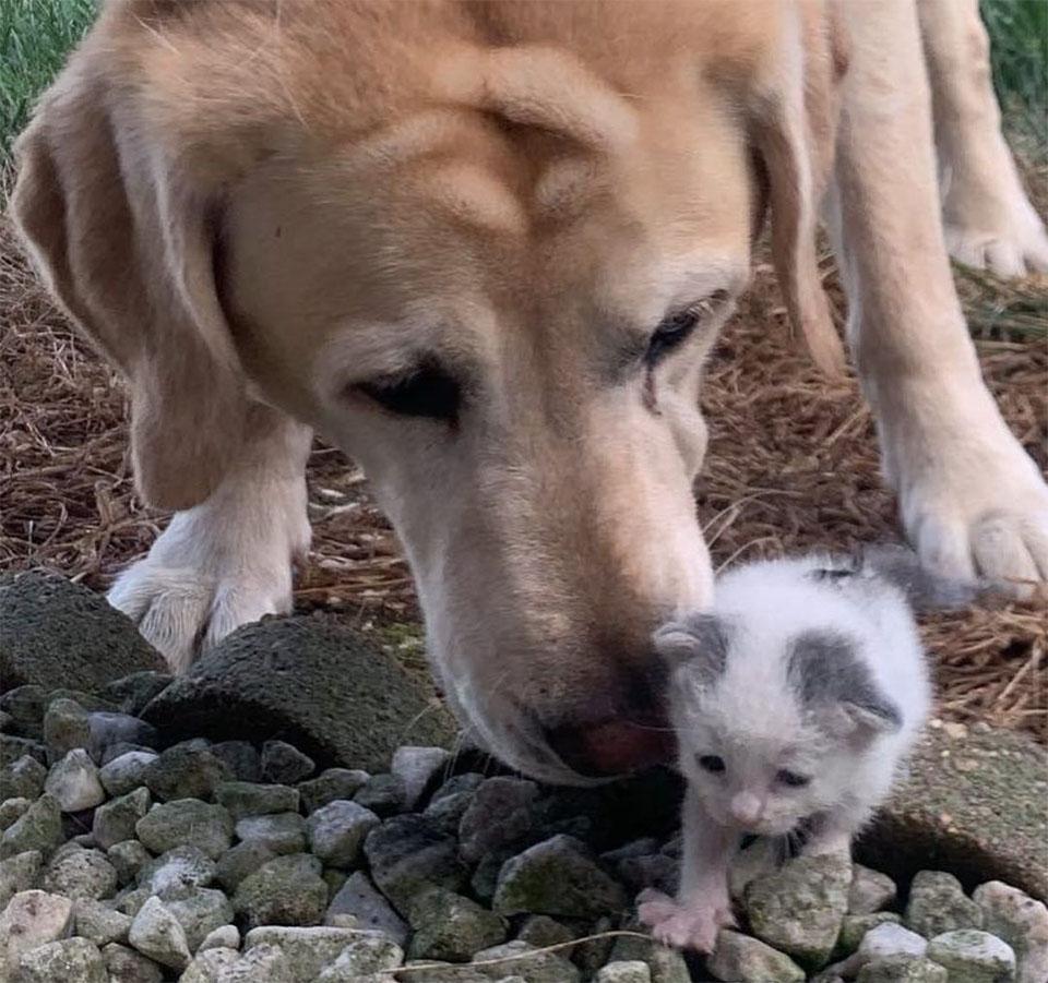 Perro toma gatita