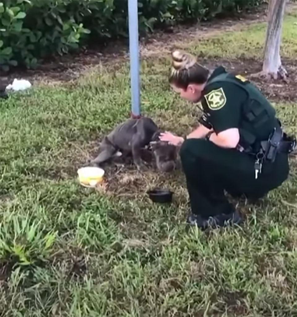 Policía acaricia perrito