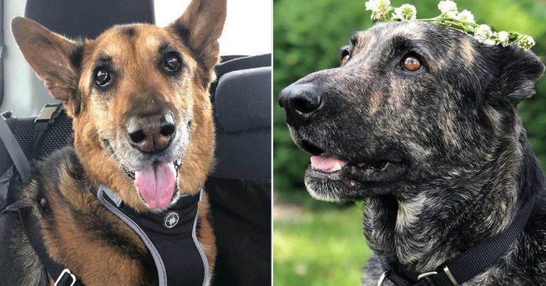 Prueba de ADN revela que la nueva perrita rescatada de esta familia es prima de su difunta mascota