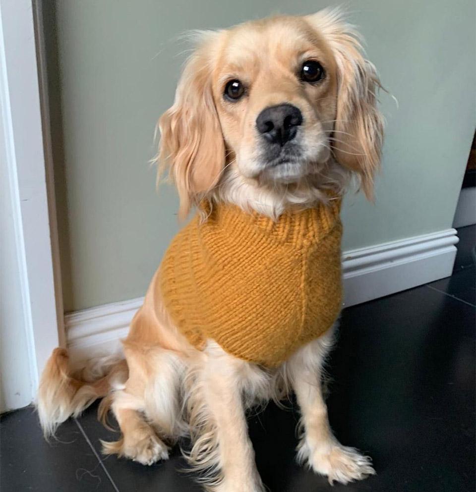 Suéter perrito