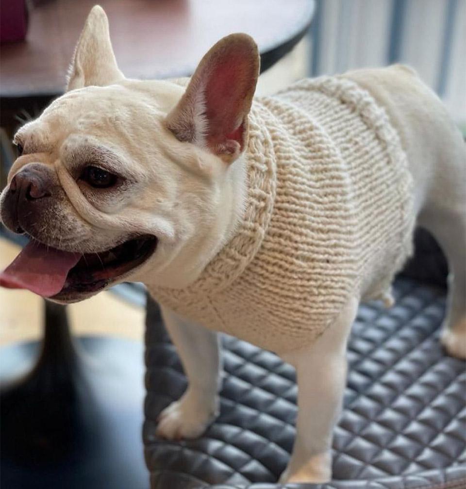 Suéter perro