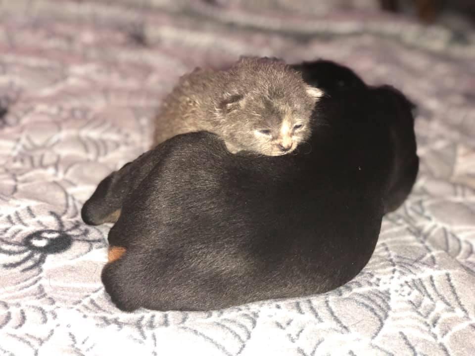 Adorable felino diminuto
