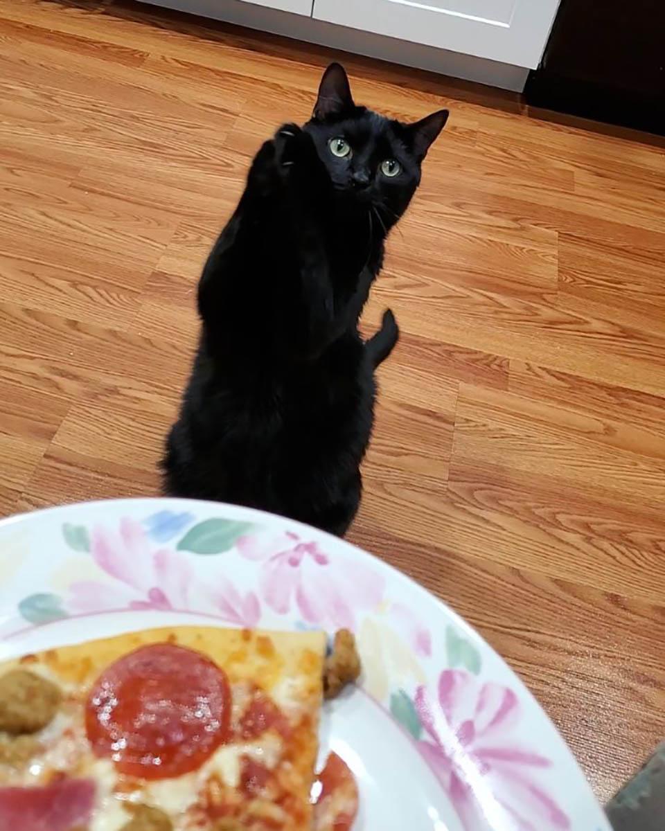 Adorable gatito negro