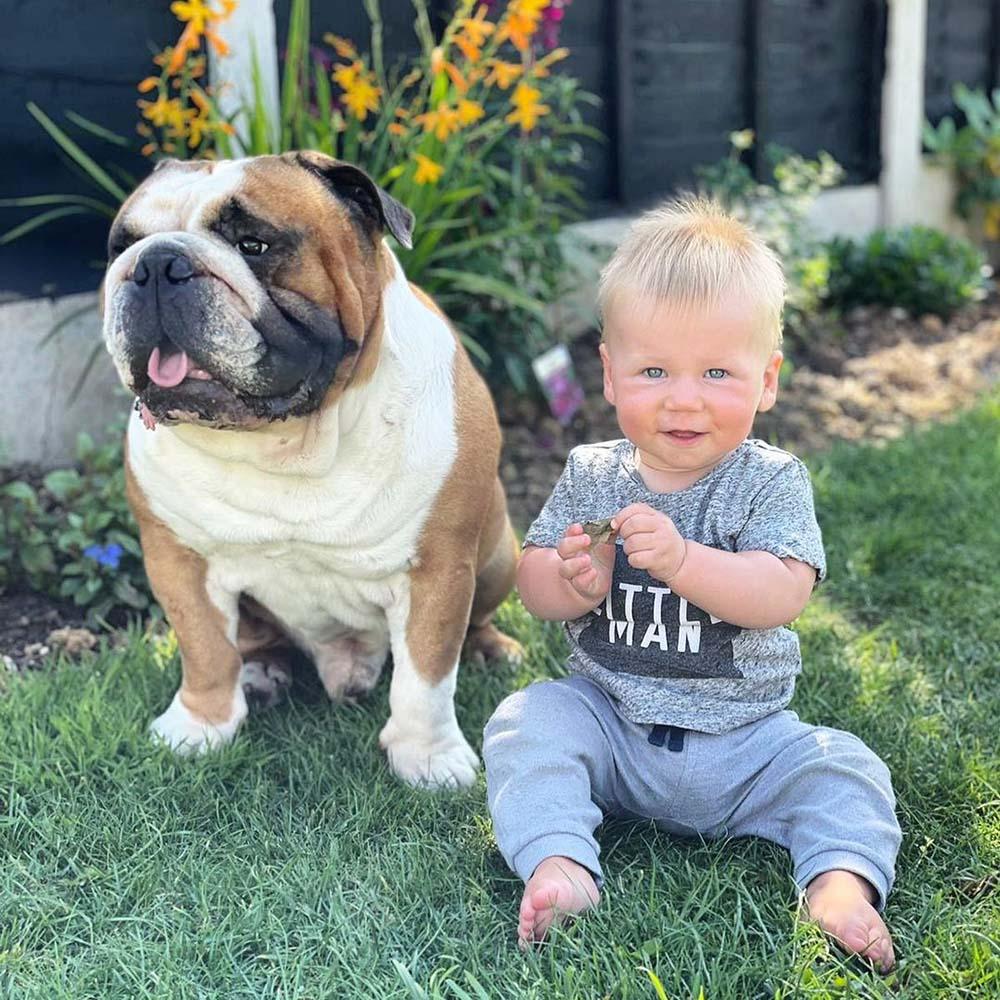 Bulldog inglés es el mejor amigo de su hermanito humano