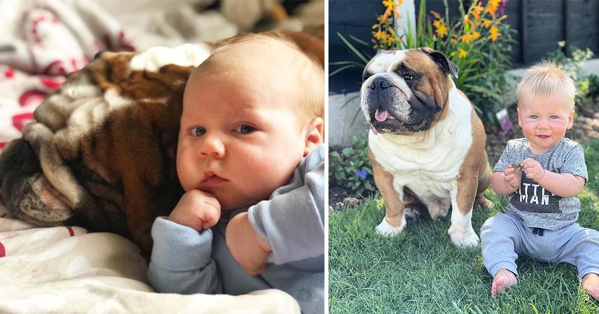 Bulldog inglés se convierte en el mejor amigo de su hermanito humano