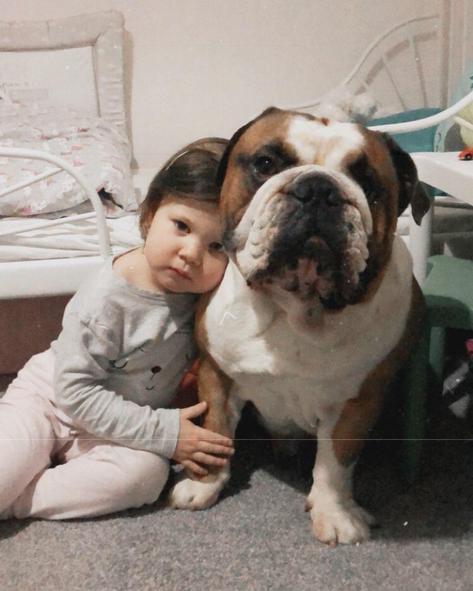 Bulldog inglés se convierte en mejor amigo del bebé