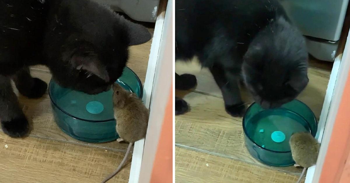 Chico encuentra a su gato haciendo amistad con el ratón que se suponía que iba a atrapar