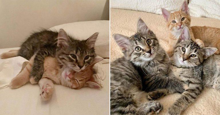 Familia buscaba adoptar dos gatitos, pero no podían dejar atrás al tercero de la camada