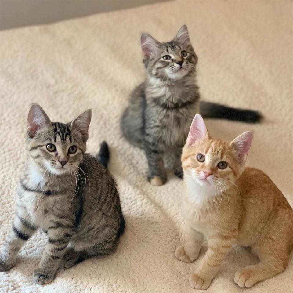 Familia buscaba adoptar gatitos