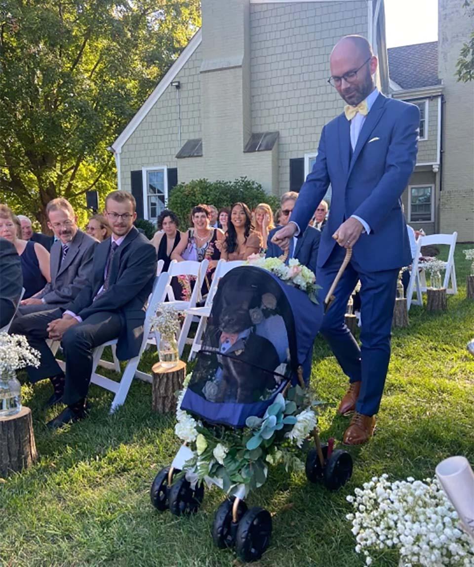 Gato elegante en boda