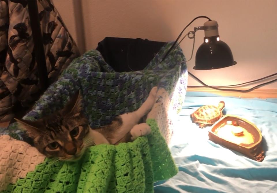 Gato rescatado convierte