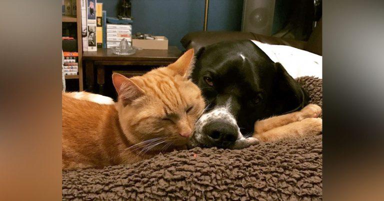 Gato y perro héroe son donantes de sangre habituales para ayudar a otras mascotas necesitadas