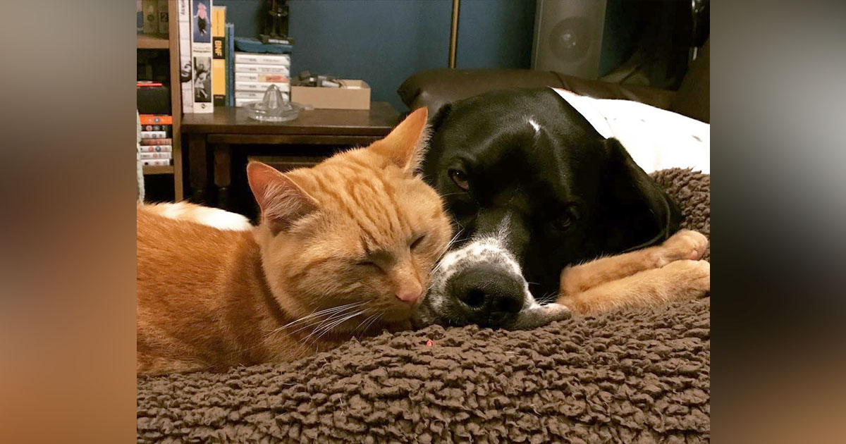 Gato y perro héroe donantes sangre