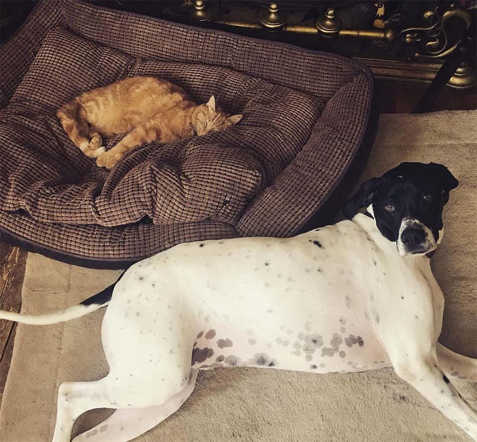 Gato y perro héroe