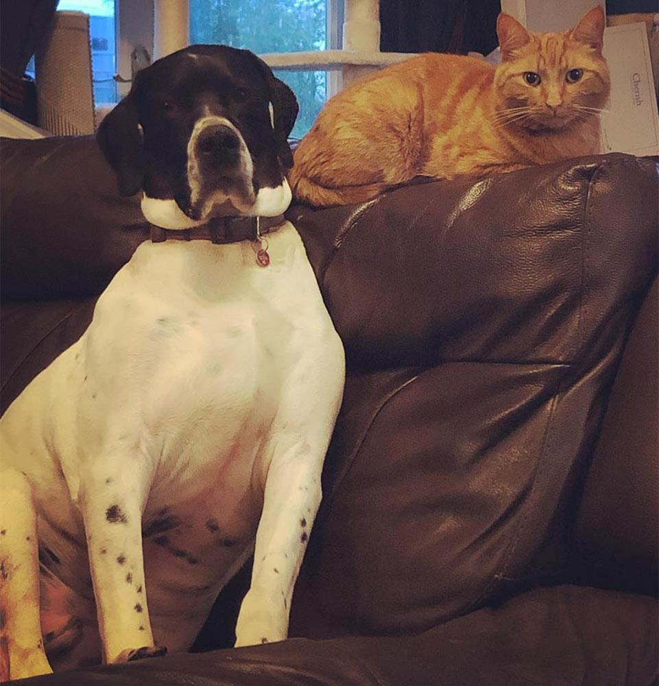 Gato y perro héroes