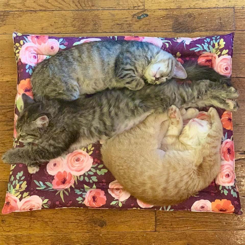 Hermanas durmiendo