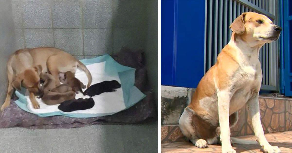 Perrita sin hogar llega a la veterinaria para tener a sus bebés mientras el padre espera afuera