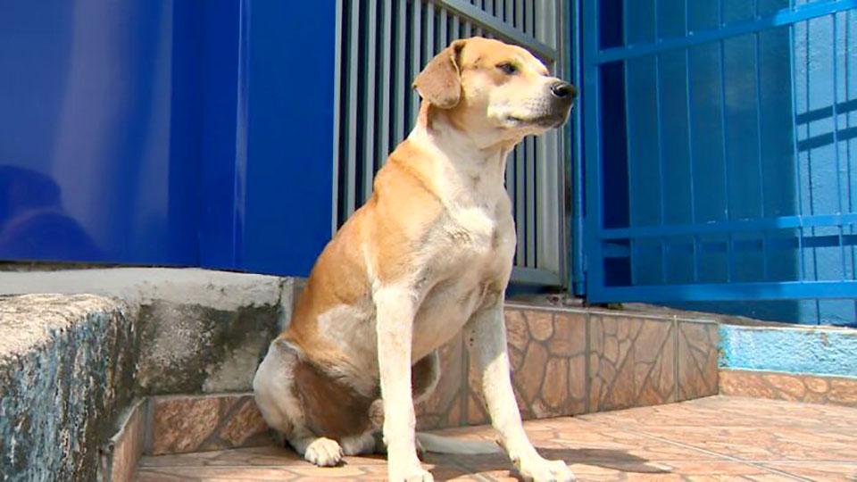 Perrita sin hogar llega a la veterinaria