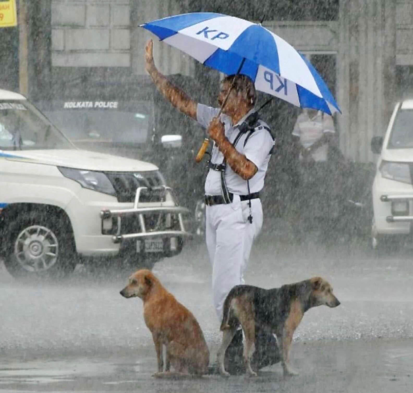 Policía comparte su paraguas con perros sin hogar durante una fuerte tormenta