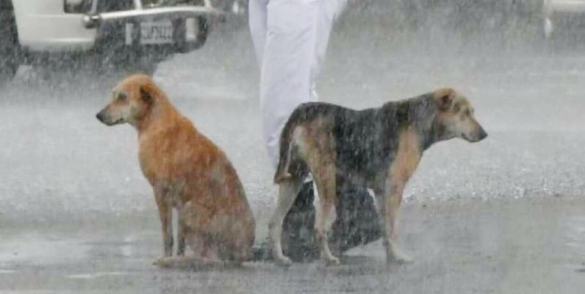 Policía comparte su paraguas con perros sin hogar