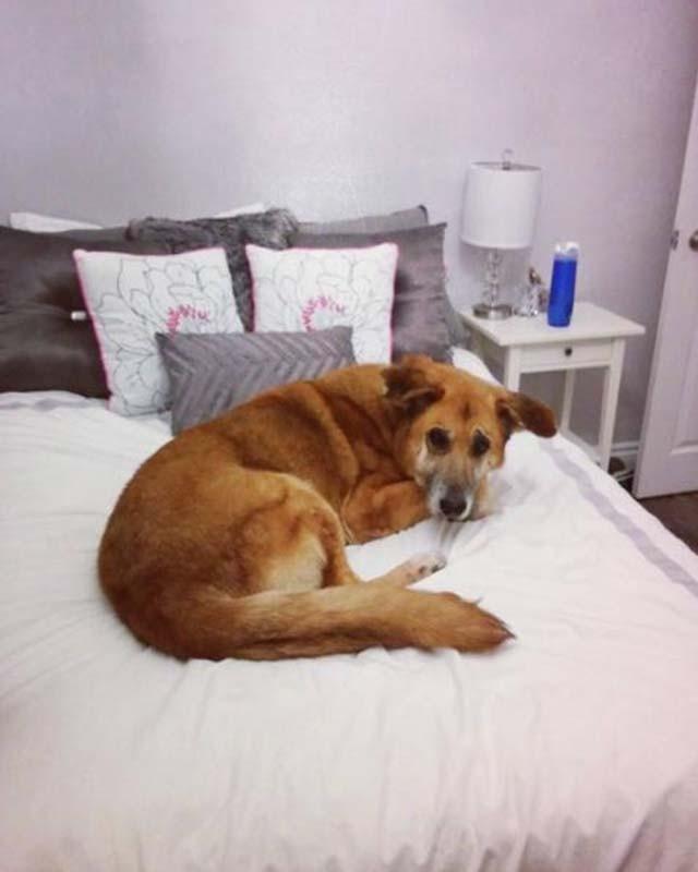 Ella no sabía que perro salvar y compró el refugio completo